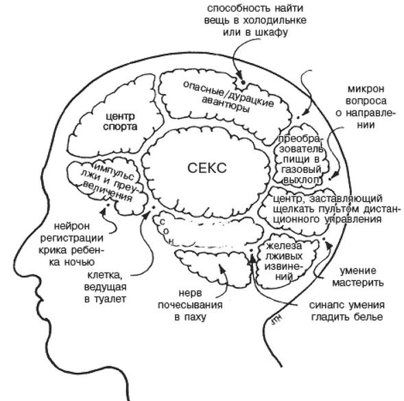 Мозок чоловіка. Це факт чи вигадка?