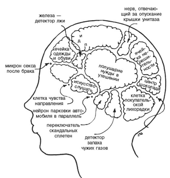 Мозок жінки.