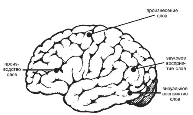 Особливі гарячі точки в мозку